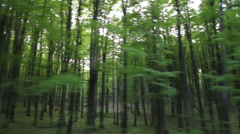 Passing with car near a spring light green trees of a wood Stock Footage