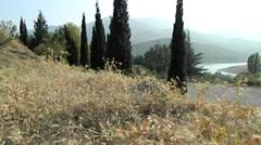 Reservoir, cypresses Stock Footage
