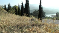 Stock Video Footage of Reservoir, cypresses