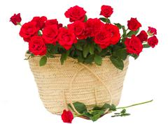 Bouquet of scarlet roses in basket Stock Photos