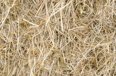 Plie of rice straw Stock Photos