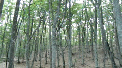 Beech forest on the mountain Chater-Dag Stock Footage