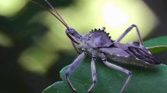 Amid Nature - Assassin (Wheel) Bug Stock Footage
