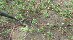 Hacking weeds Stock Footage