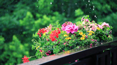 Flowers and rain in garden Stock Footage
