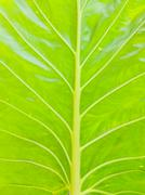 Stock Photo of Background of leaves.