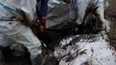 öljyvuoto katastrofi työntekijöiden CLEAN Tropical Beach Arkistovideo