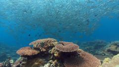 Coral reef and huge school of silver fish Stock Footage