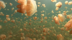 Jellyfish Lake Tracking shot Stock Footage