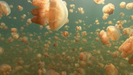 Jellyfish Lake Tracking shot Stock Footage
