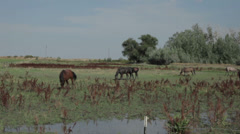 horses in a pasture - stock footage