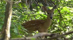 Amid Nature - Whitetail Deer Fawn in the Forest - stock footage