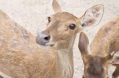 doe eye - stock photo