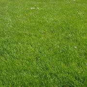 Stock Photo of grass meadow