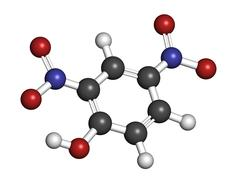 2,4-dinitrophenol (dnp), molecular model Stock Illustration