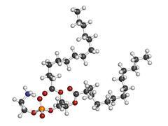 Phosphatidylethanolamine (pe) cell membrane building block, molecular model. Stock Illustration