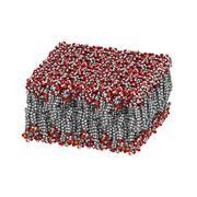 Palmitoyloleoylphosphatidylethanolamine (pope) lipid bilayer, molecular model Stock Illustration