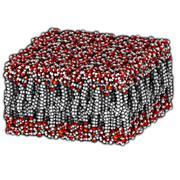 palmitoyloleoylphosphatidylethanolamine (pope) lipid bilayer, molecular model - stock illustration