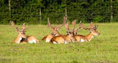 Red deer in the New Forest Hampshire England - stock photo