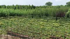 High angle view of tree nursery, deciduous trees and espaliers  - vehicle shot Stock Footage