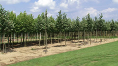 Tree nursery on clay in Dutch river landscape - vehicle shot Stock Footage
