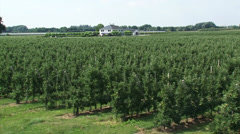 Orchard apple trees grafted on dwarfing rootstocks  - vehicle shot Stock Footage