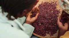Beans sorting above - stock footage