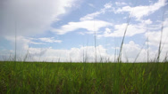 Stock Video Footage of Marshland grass passing