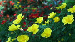 Yellow flowers slow motion - stock footage