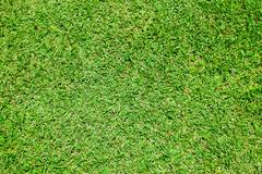 texture of green grass - stock photo