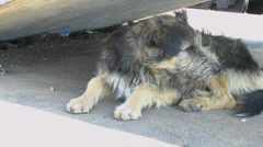 A stray dog - stock footage