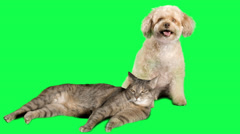 Cat and Dog - Adorable Cute Pets on Green Screen - Chroma Key Background Stock Footage