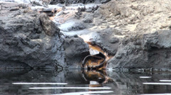 Oil pollution, detail - stock footage