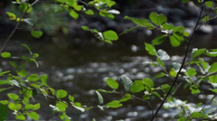 View of the river water through the leaves 20130807153822 Stock Footage