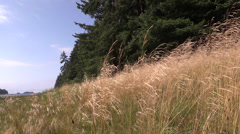 Bay side grass blowing Stock Footage