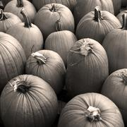 Stock Photo of A bunch of pumpkins