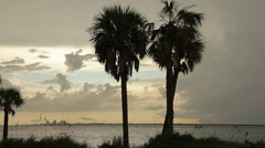 Palm trees with St. Petersburg Florida Skyline in the distance Stock Footage
