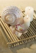 Still life of orchids, candles and seashell - stock photo