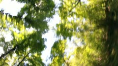 Shot of a moving tree from a car Stock Footage