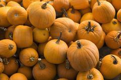 A large group of pumpkins Stock Photos