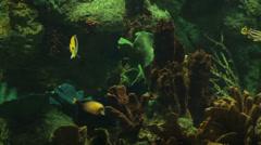 Salt water aquarium coral HD 8895 Stock Footage