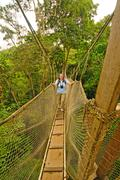 hiker on tree canopy walkway above the rain forest - stock photo
