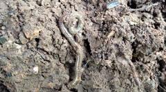 Earthworm in soil Stock Footage