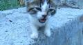 Small street kitten Footage