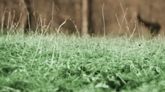 Still shot of grass from frog perspective Stock Footage
