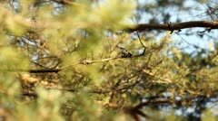 Still shot of branches blown in wind Stock Footage