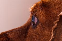 Stock Photo of dog detail