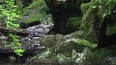 Salmon stream, dry spell - stock footage