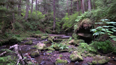 Salmon spawning, low water Stock Footage
