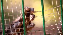 Inside Outside: Primate Hand behind Bars Stock Photos